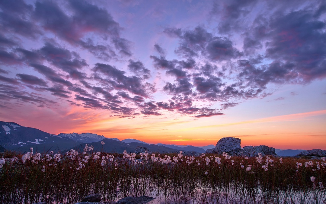 nature_landscapes_mountains_flowers_plants_lakes_ponds_water_reflection_sky_clouds_sunset_sunrise_color_scenic_1920x1200