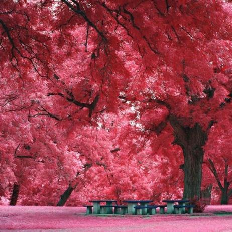 Tarde, bancos e sono cor-de-rosa
