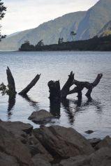 Lago Tagua, Chile