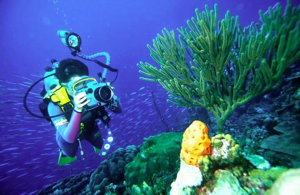 Mergulho em Bonaire, Antilhas Holandesas