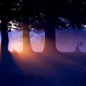Árvores - Bosque - Ocaso