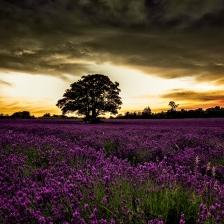 Campos - Crepúsculo - Flores