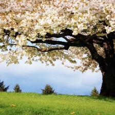 Flores - Árvores - Primavera