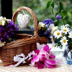 Flores - Jacinto - Camomila
