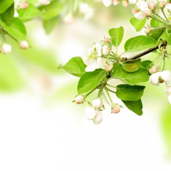 Primavera - Flores - Plantas