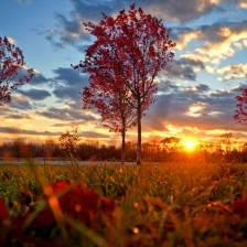 Relva - Vermelho - Flores - Ocaso