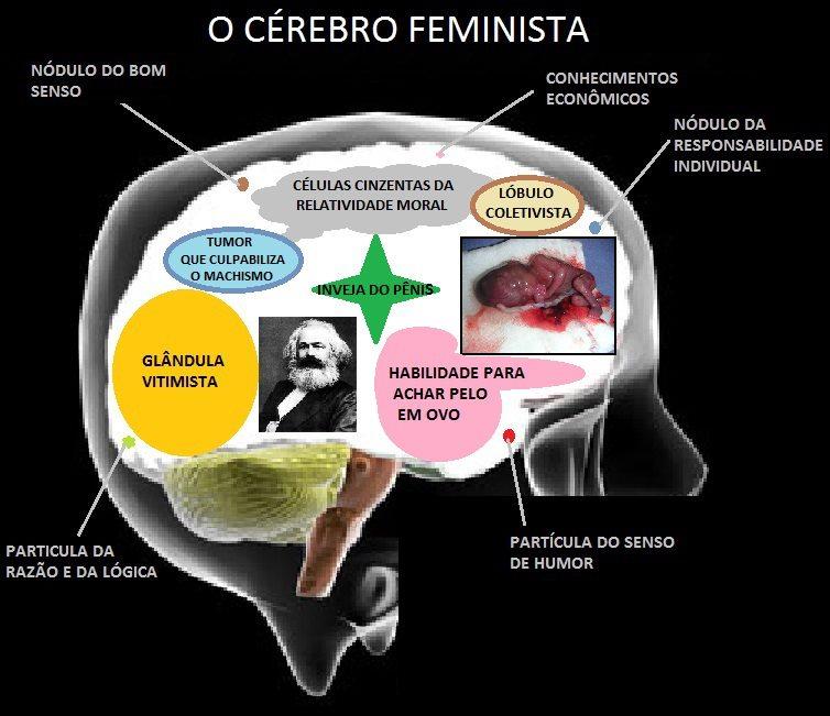 Cérebro Feminista