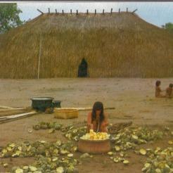 Preparos para a festa do pequi na aldeia dos índios Kuicúro no alto Xingu