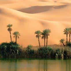 Desert_oasis_1280x853