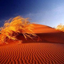 deserts_sand_dunes_Africa_bushes_Namib_Desert_1280x960