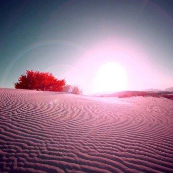 Pink_desert_1280x800
